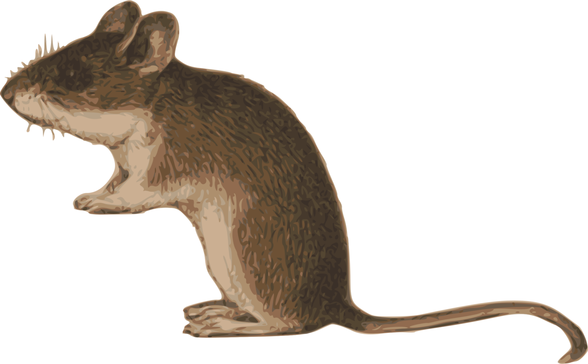 Brown clipart brown rat. Gerbil house mouse common