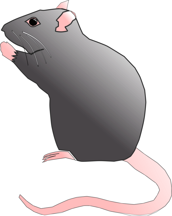 Mouse clipart rodent. Gerbil vertebrate free commercial