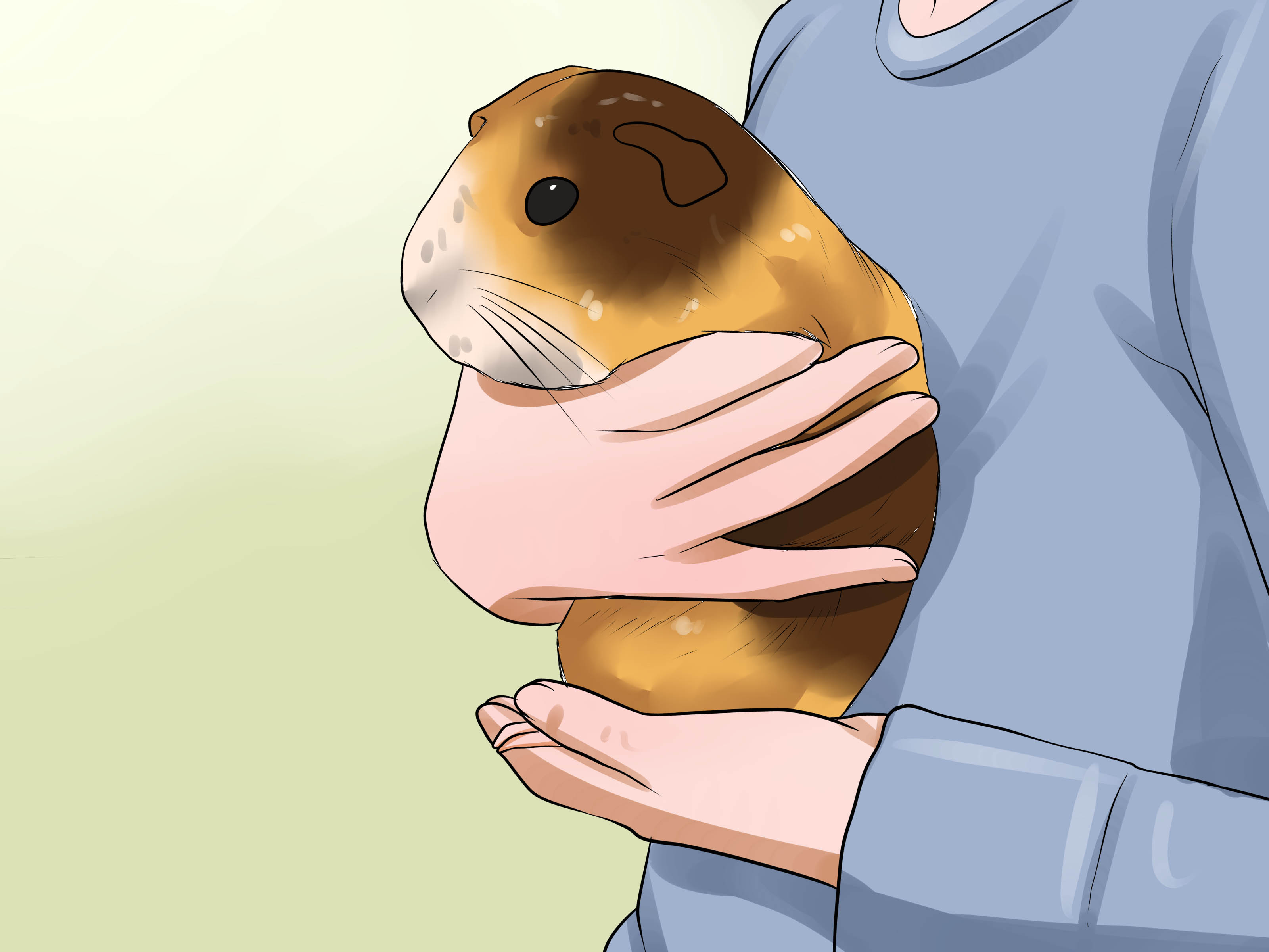 Hamster clipart guinea pig. How to convince your