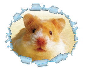 Hamster clipart humphrey. Pictures page one school
