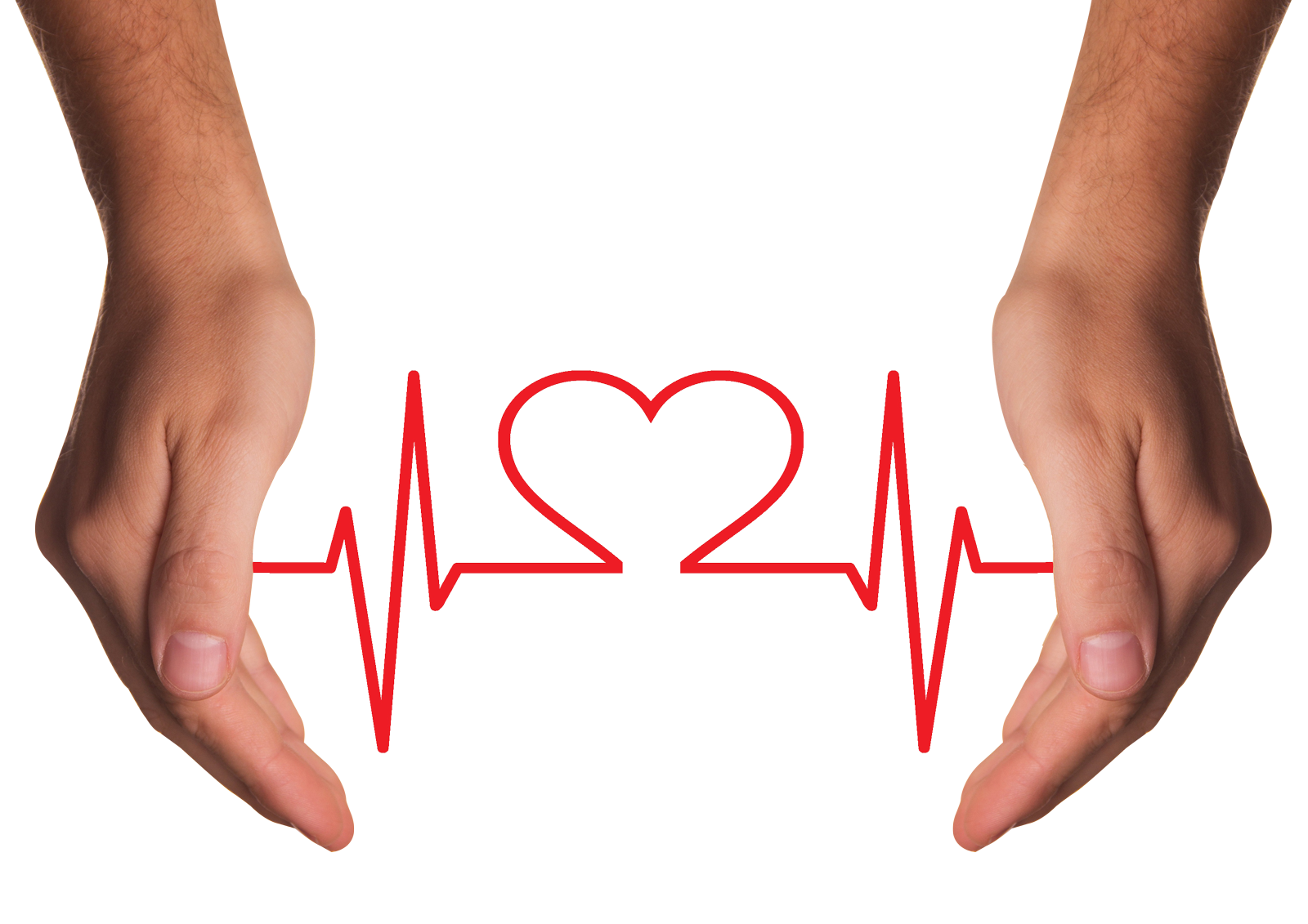 Hands holding png. Red heart with ecg