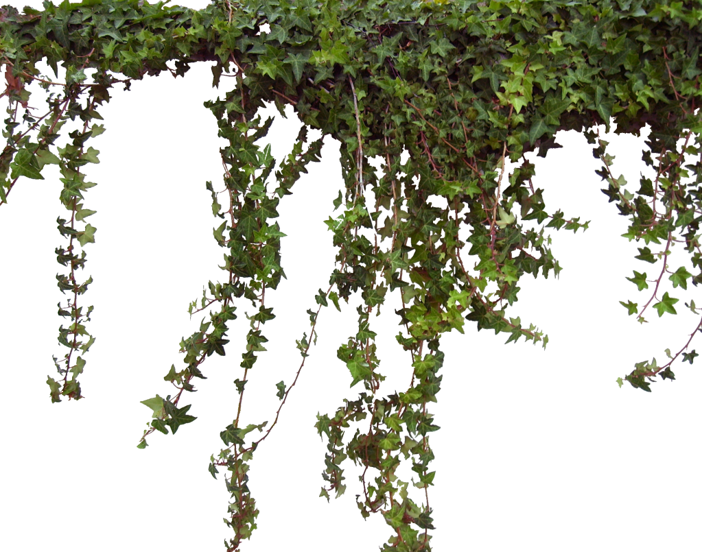 Hanging ivy png. L photo by flromantic