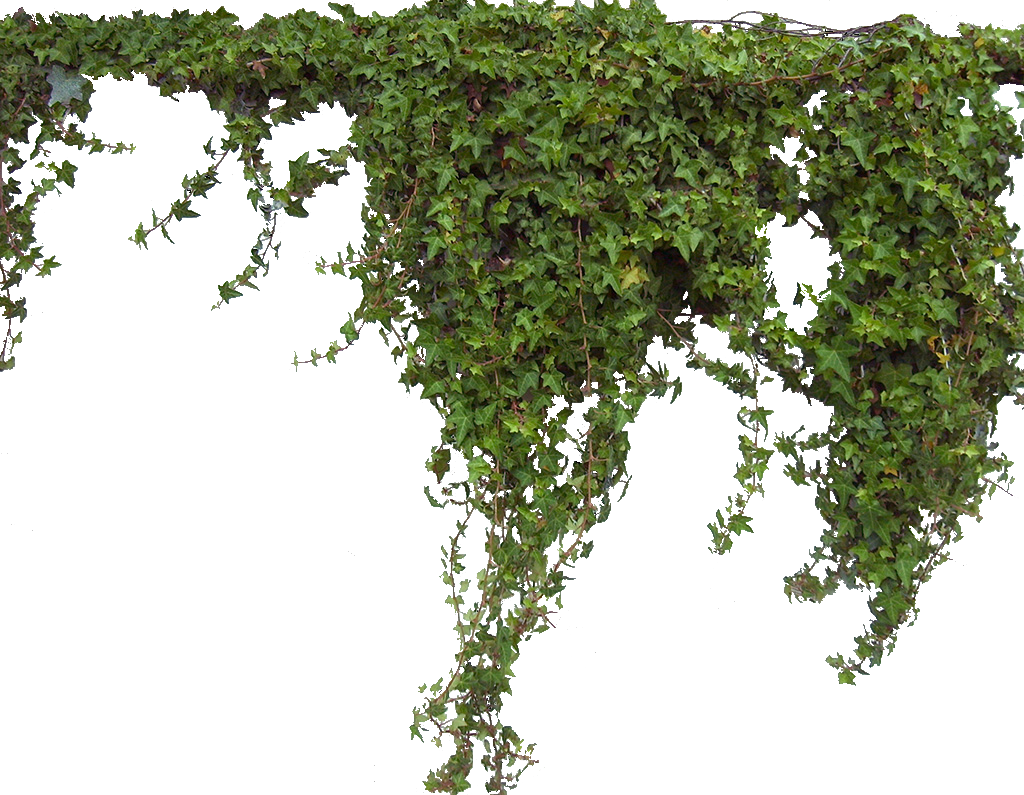 Ivy png. Transparent pictures free icons
