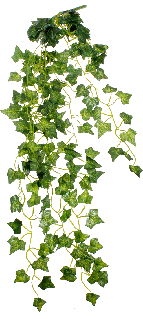 Hanging ivy png. Pin by arthur petrosian
