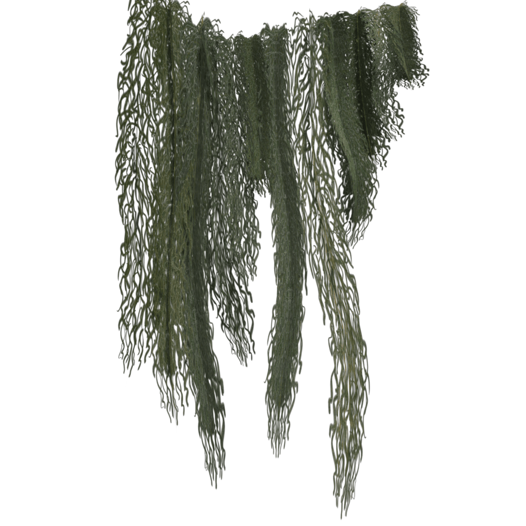 Hanging moss png.