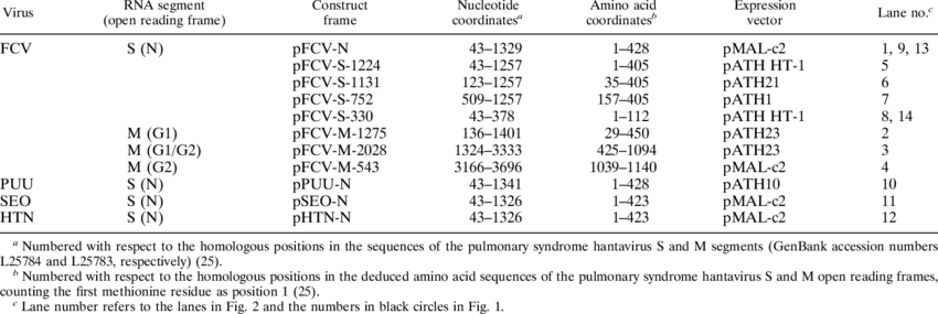 Hantavirus vector. Expression constructs download table