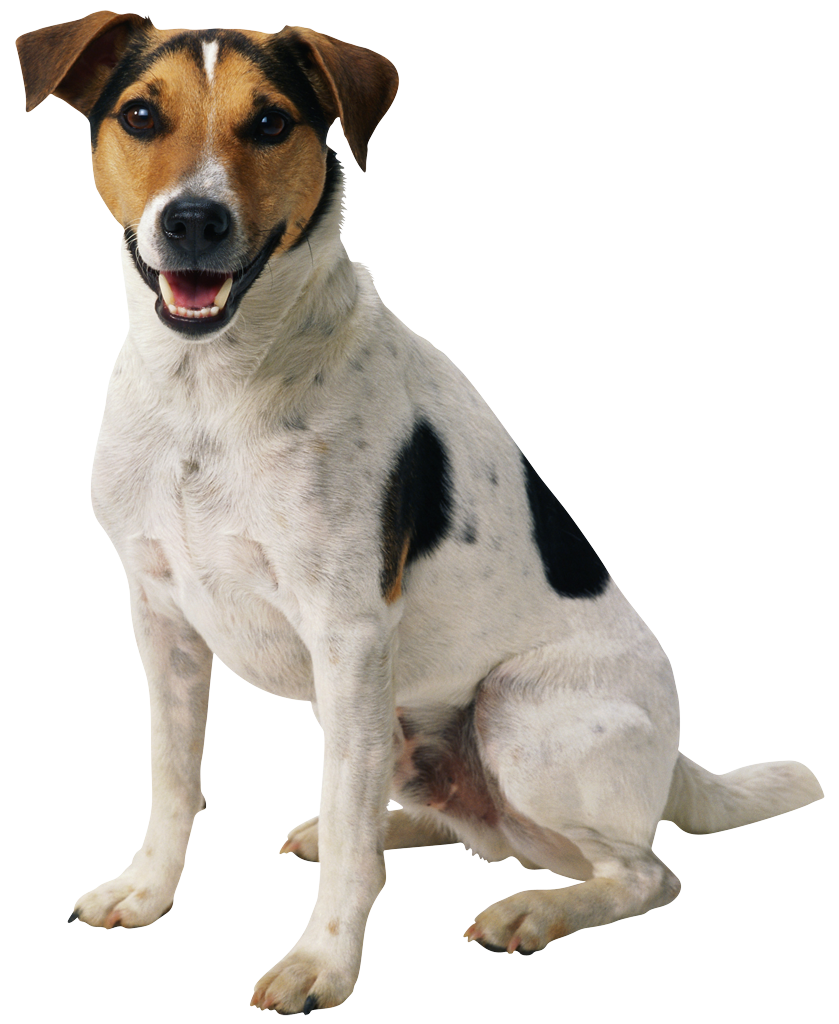 Happy dog png. Puppy