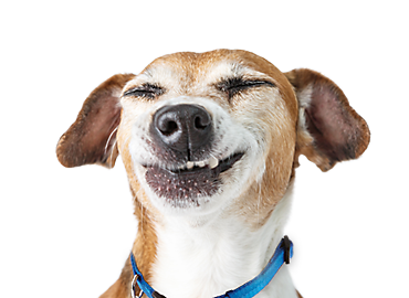 Happy dog png. And cat clipart images