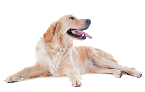happy dog png