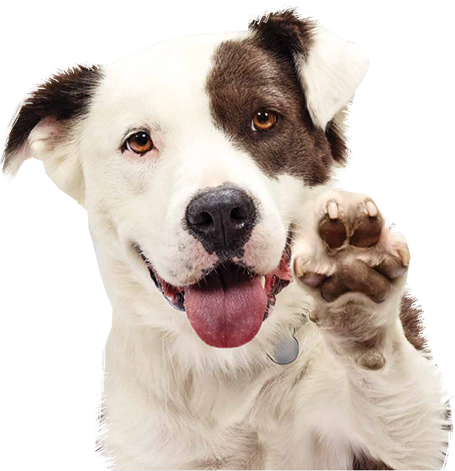 Happy dogs png. Additional services express dog