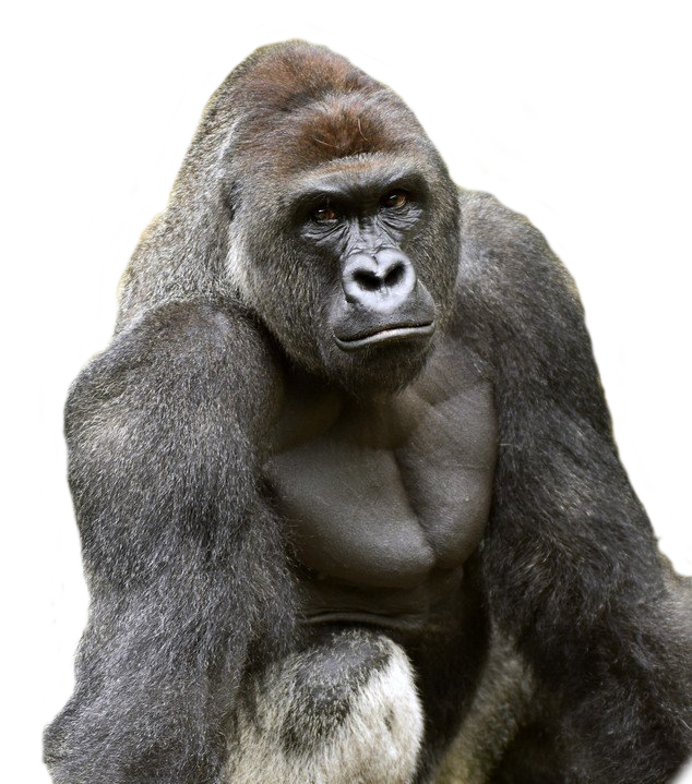 Harambe face png. Cut out album on