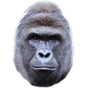 Drawing gorillas harambe. Image png dogehouse wikia