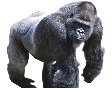 Harambe png. Justice for summary dotabuff
