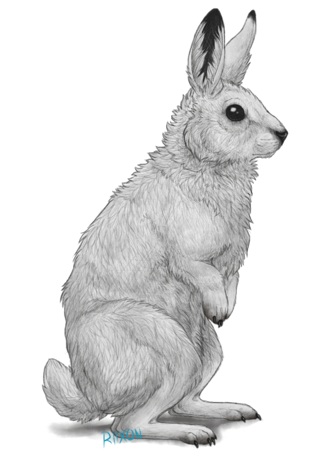 Hares drawing group. Arctic hare by riixon
