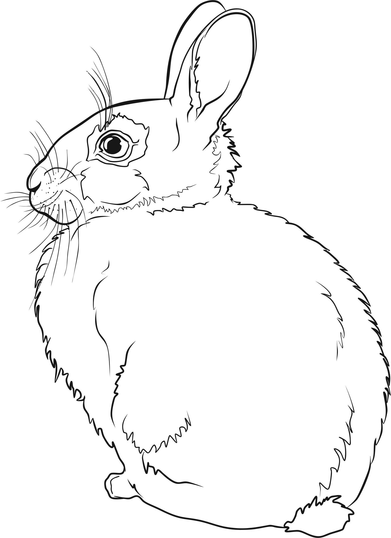 Hares drawing. Hare line at getdrawings