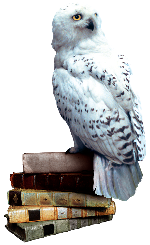 Harry potter owl png. Image hedwig books wiki