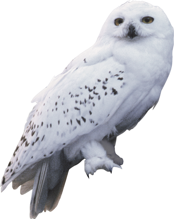harry potter owl png