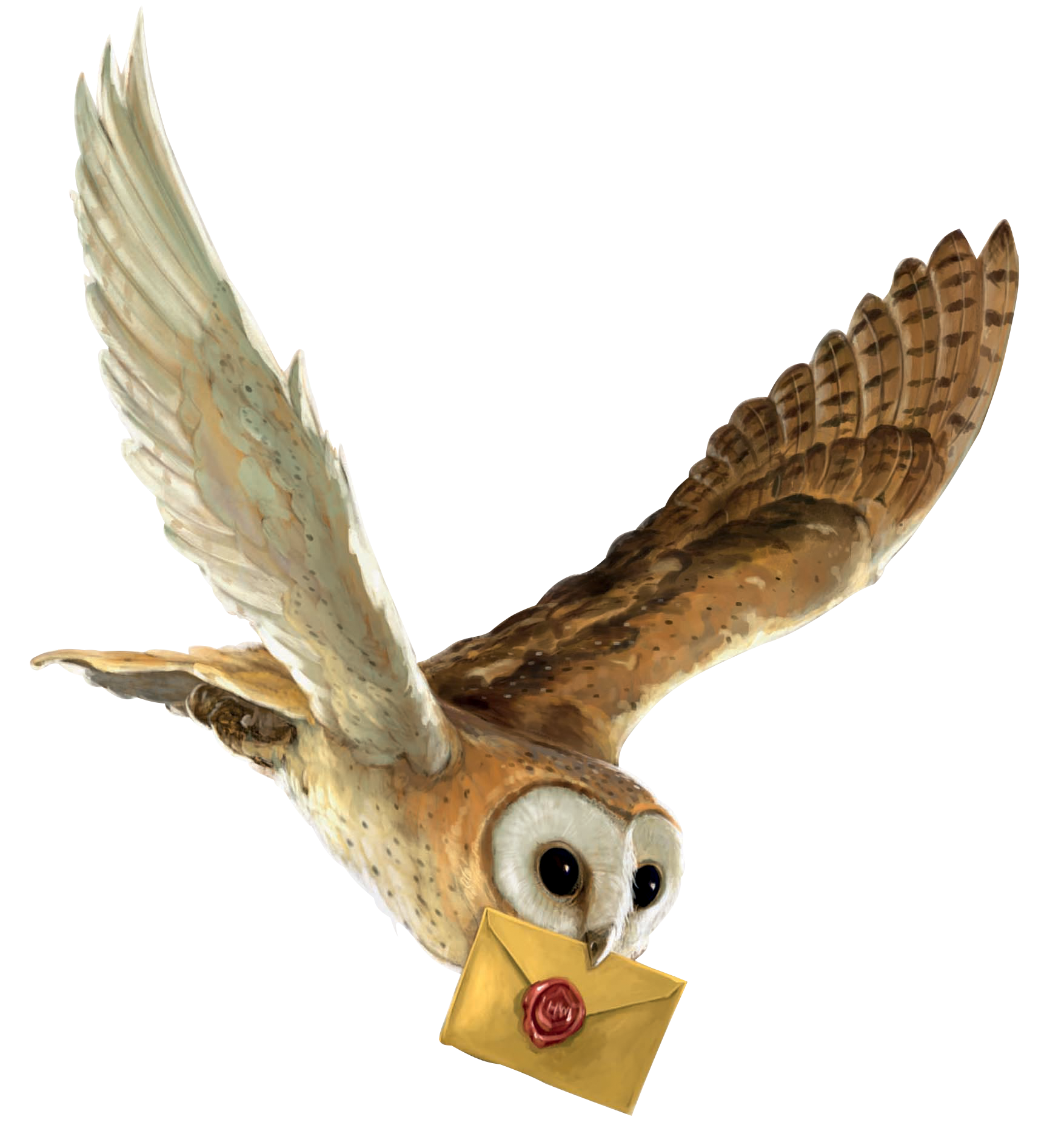 Harry potter owl png. And the philosopher s