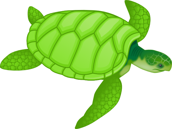 Tortoise vector shark. Free hawaiian turtle cliparts
