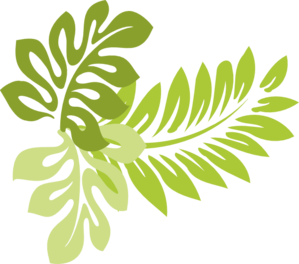 Leaf . Hawaiian clipart freeuse