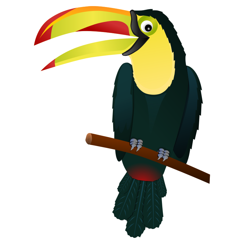 brazil drawing bird