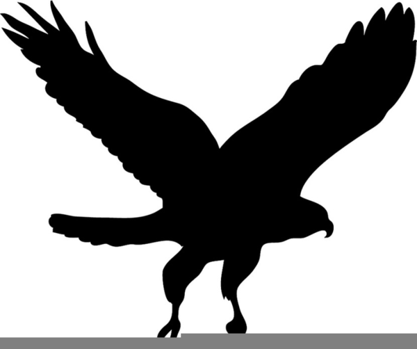 Black free images at. Hawk clipart graphic transparent library