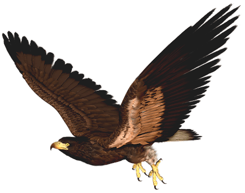 Hawk clipart eagle. Flying cliparts zone