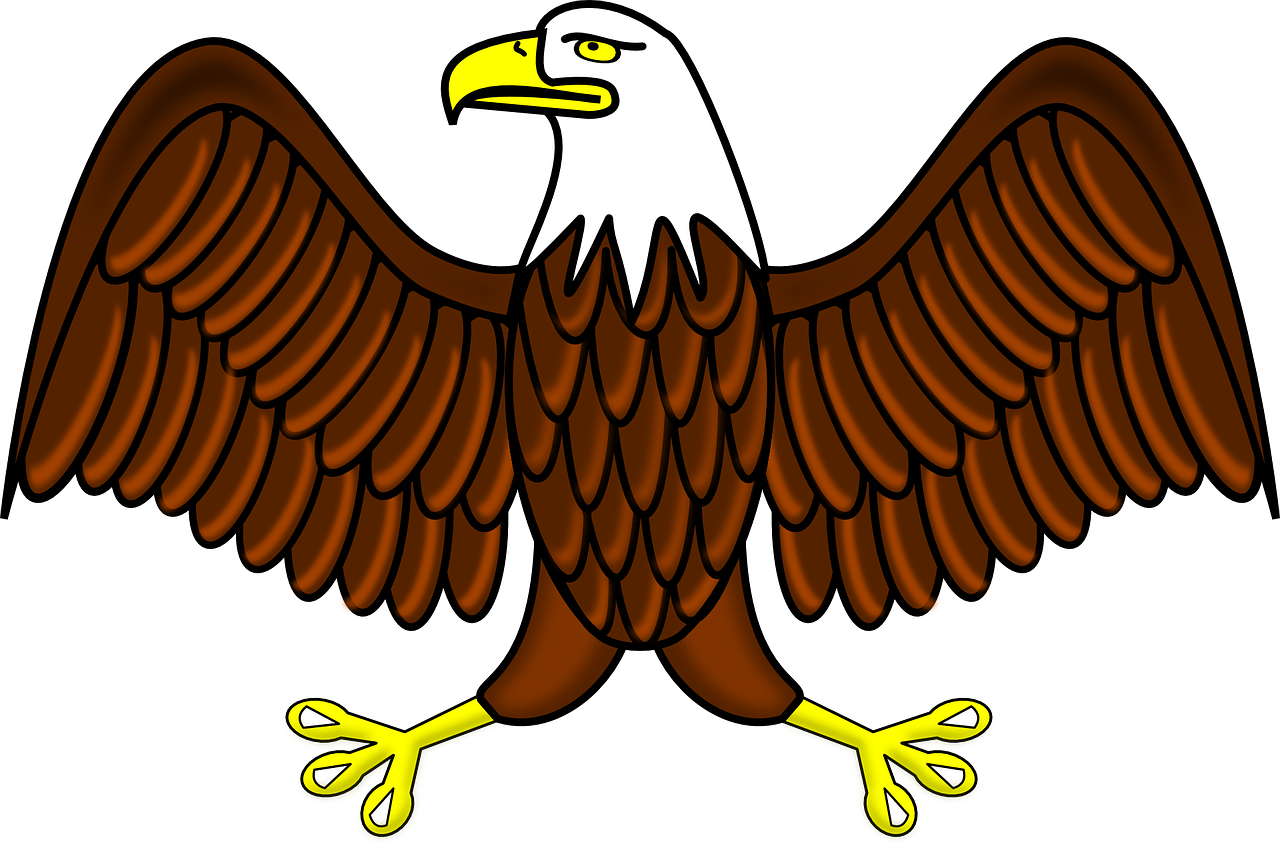 Hawk clipart raptor bird. Bald eagle transparent image