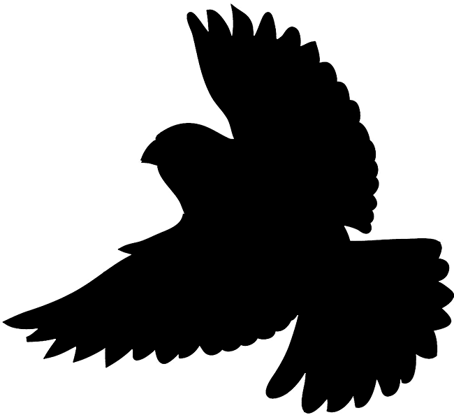 Flying vector hawk wing. Bird silhouettes silhouette of