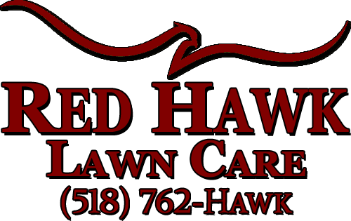 Hawk transparent maroon. About red lawn care