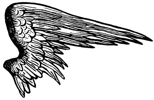 Hawk transparent wings. Angel wing overlay uploaded