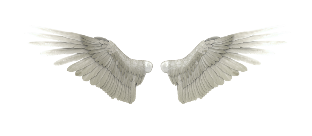 Png wings. Angel high quality image