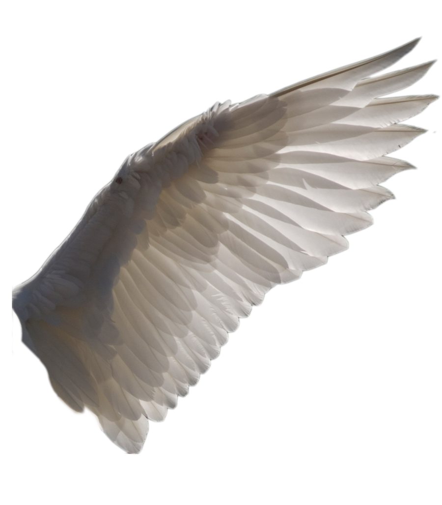 Owl wings png. Wing by evelivesey deviantart