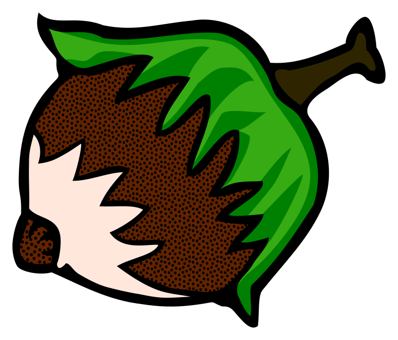 Hazelnut drawing line. Clipart coloured medium image