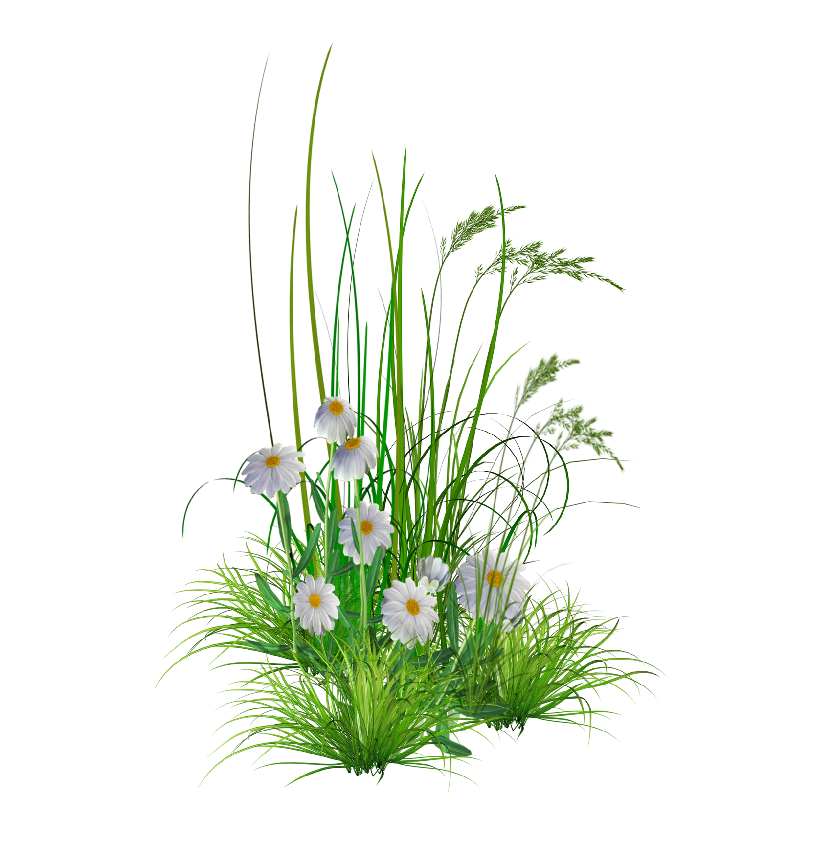 Wild flowers png. Transparent flower hd background
