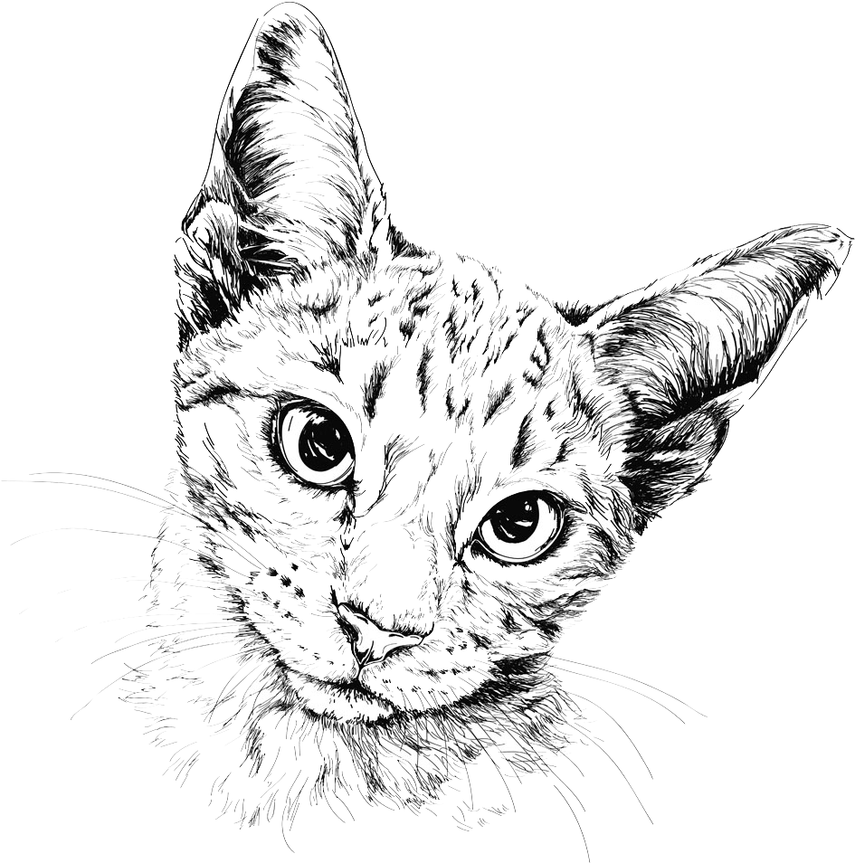 Hd drawing eye. Download cat painting illustration