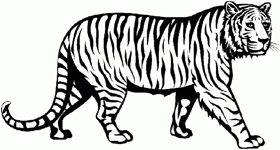 Head clipart white tiger. Black and elegant of