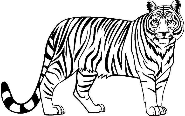 black clipart white tiger