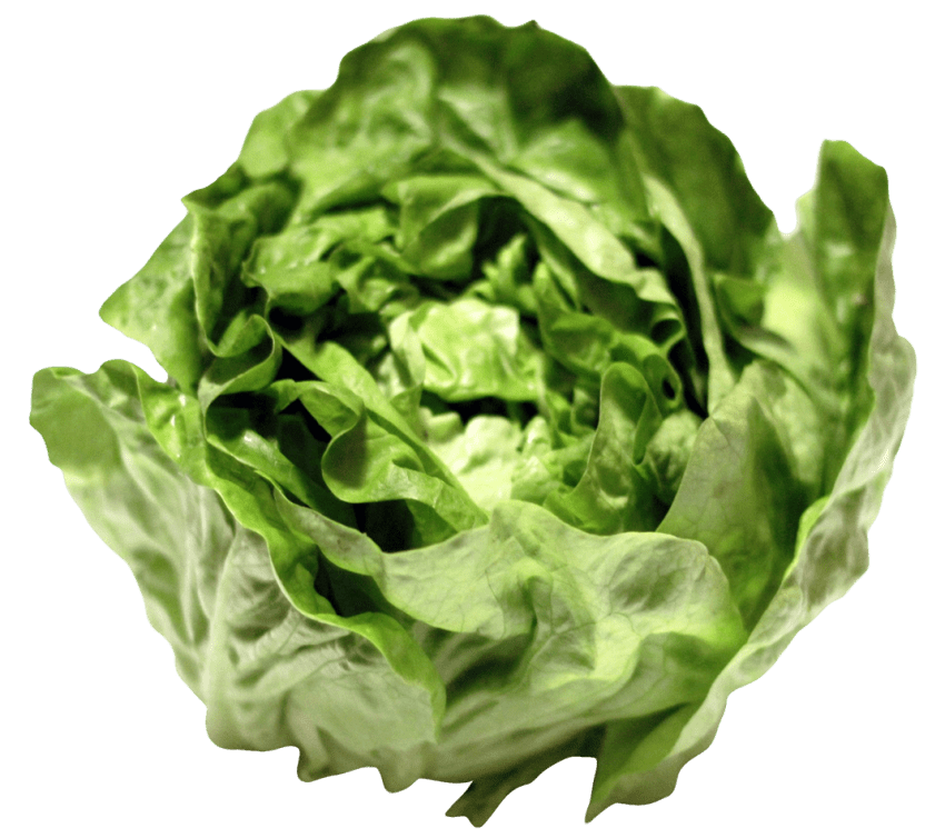 Lettuce png. Free images toppng transparent
