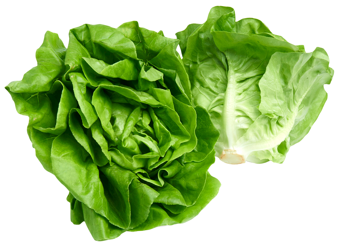 Lettuce png. Butterhead image purepng free