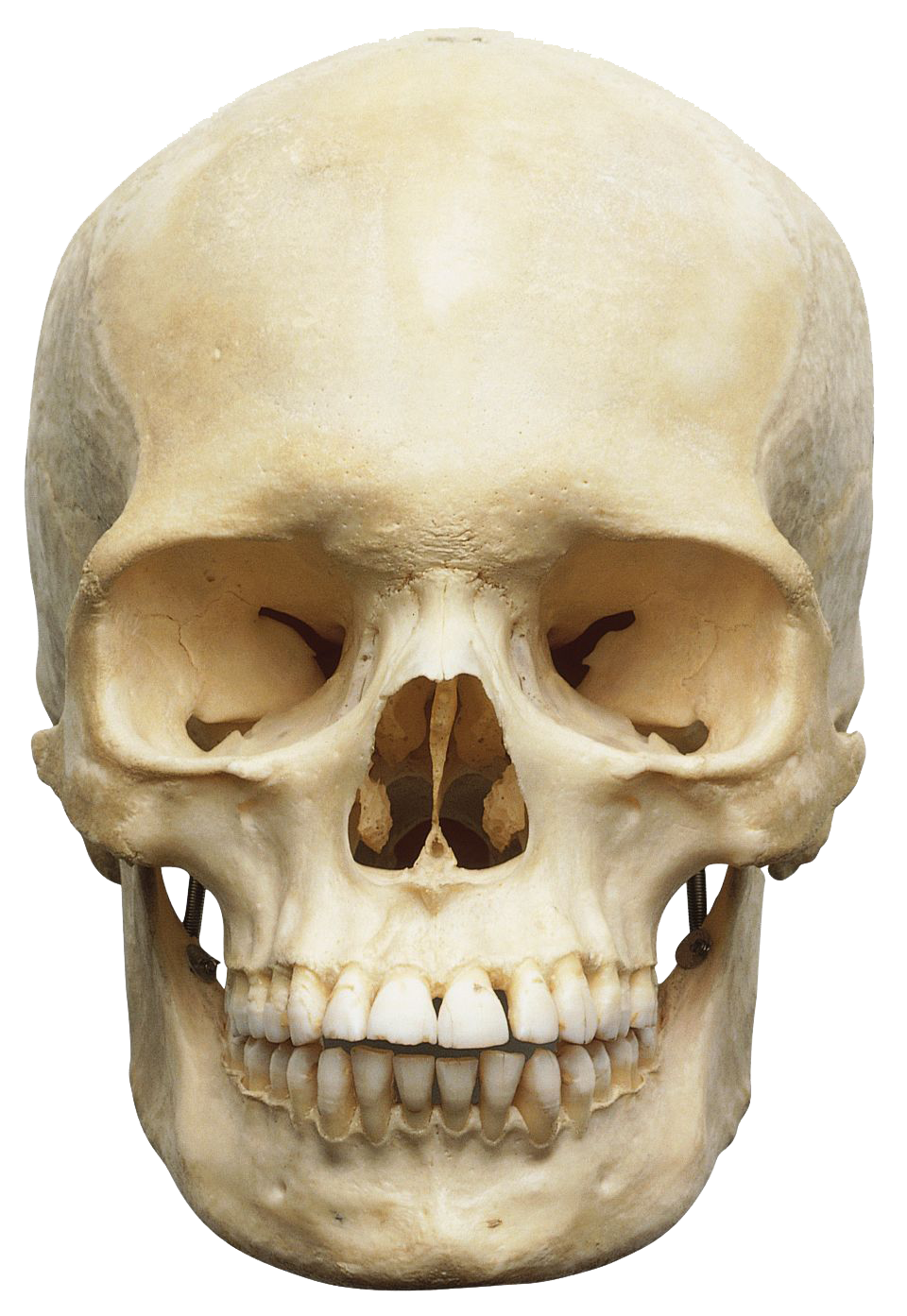 Head png. Skeleton transparent images all