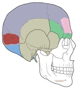 Understanding trigger points with. Headache clipart eye pain png free
