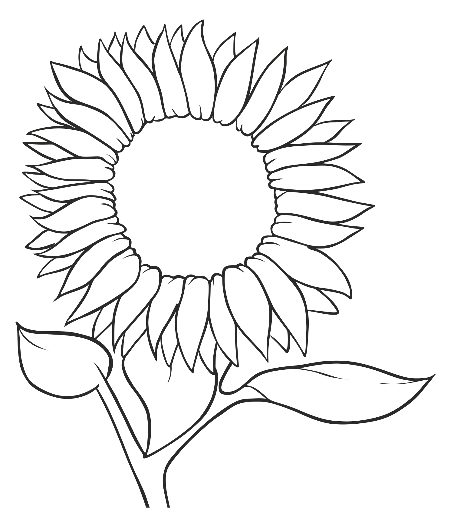 Drawing sunflowers black grey. Common sunflower seed sketch