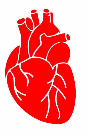 heart, png healthy