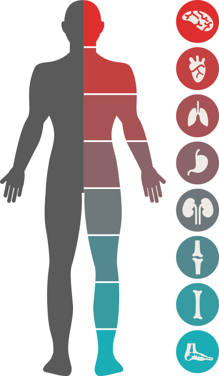 Health transparent body image. Whole clear background medium