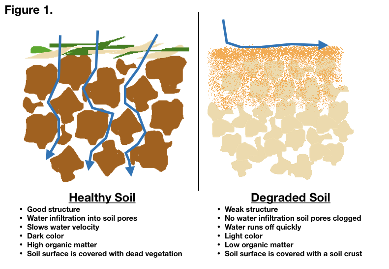 Healthy soil png. Health for storing water