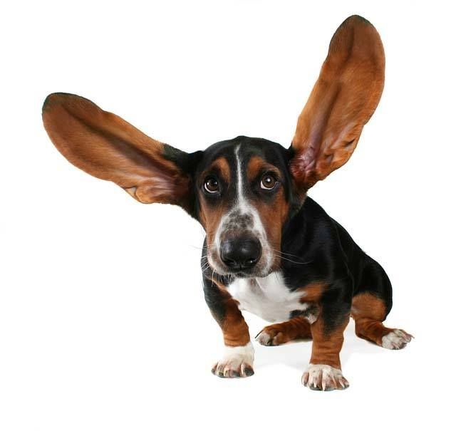 Hearing clipart large ear. Best vocab images