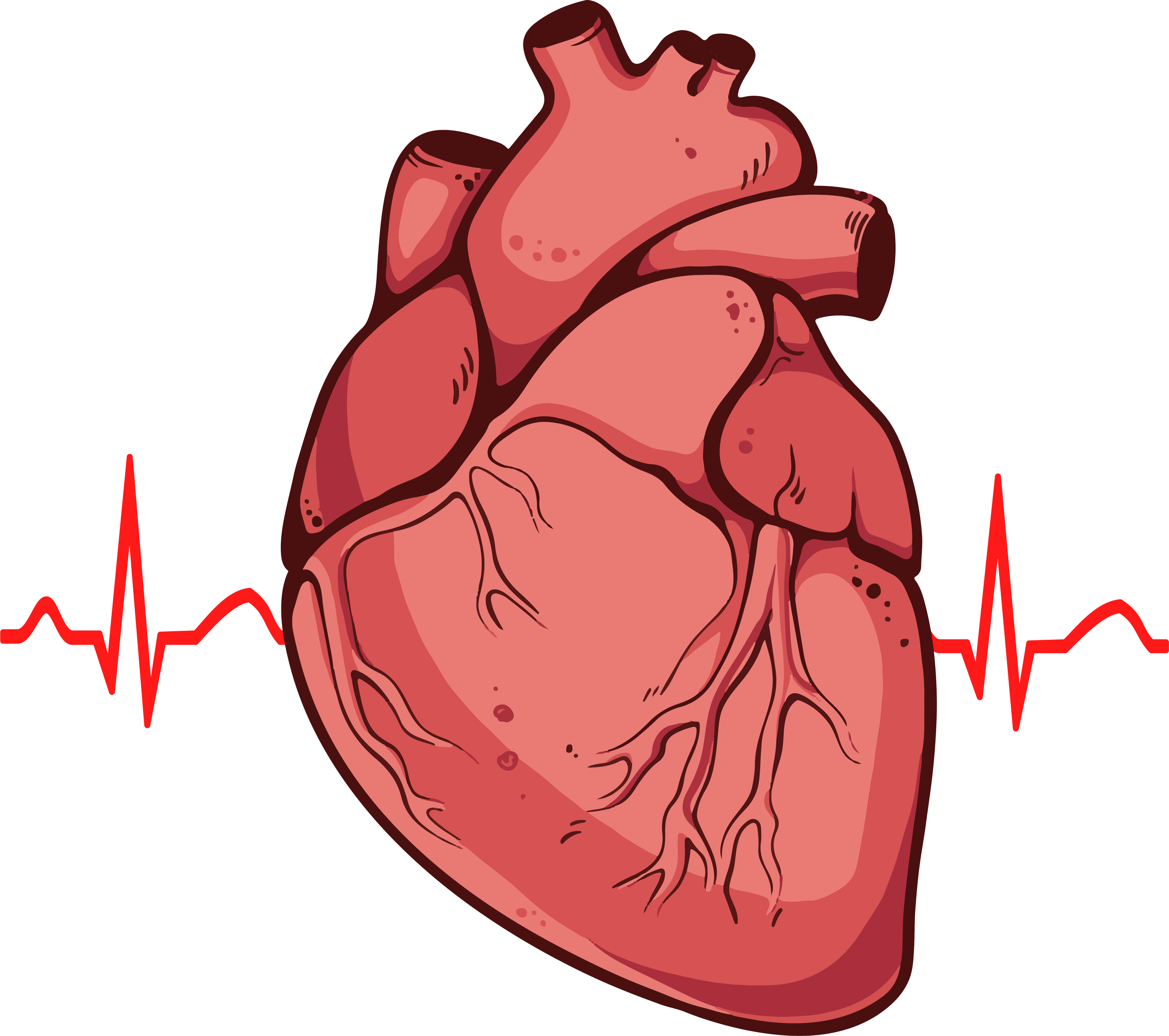 Heart muscle png. Real