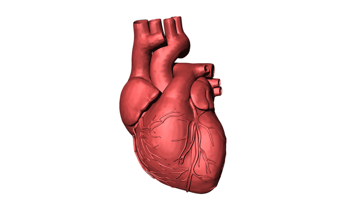 Heart muscle png. Scan can help some