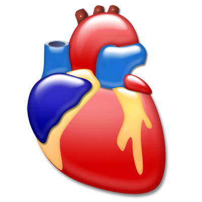 Heart organ png. Cardiology icon download free